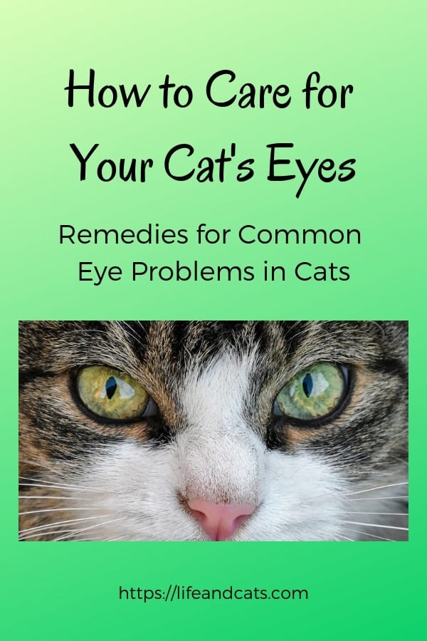 How To Care For Your Cat S Eyes Life Amp Cats
